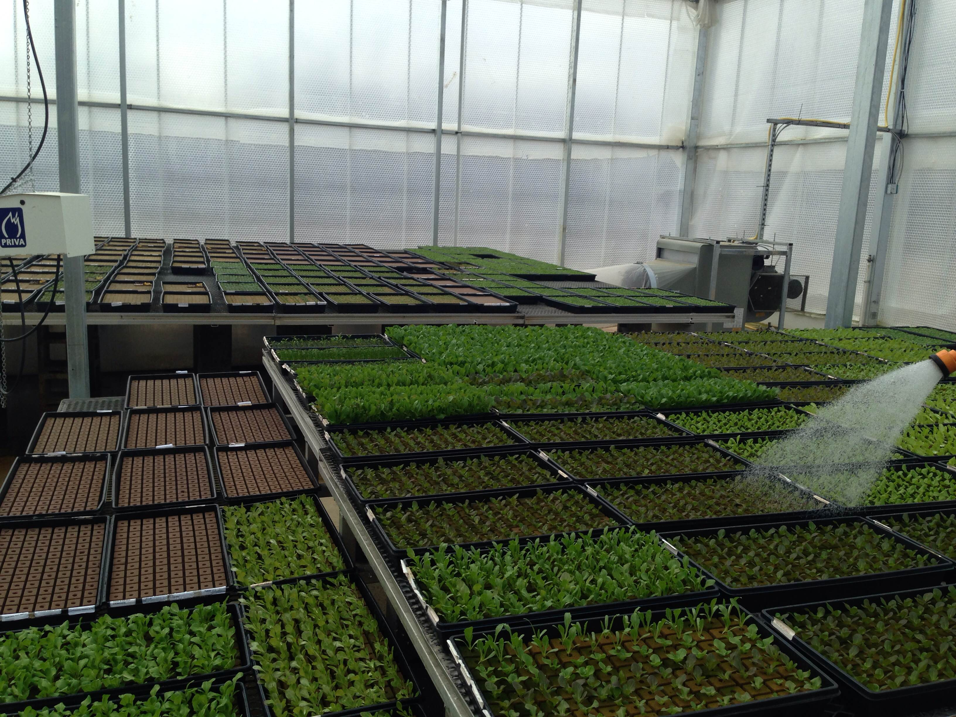 Seedlings Are Watered by Hand